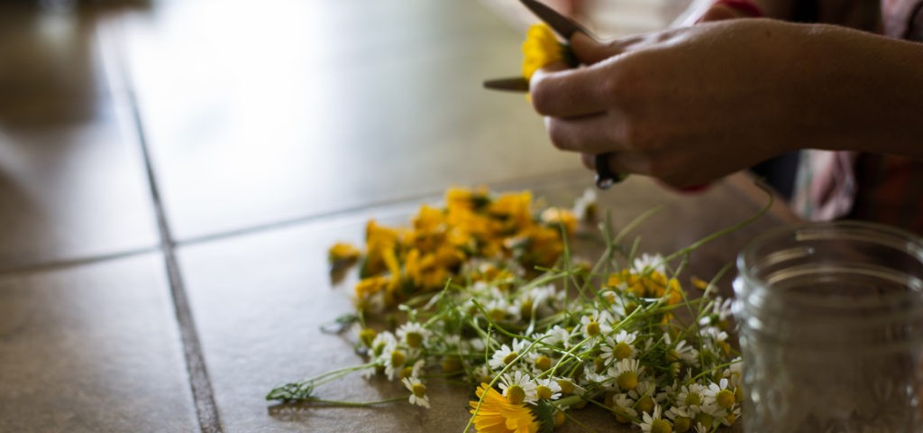5 Healing Herbs That You Can Grow This Spring