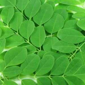 moringa-leaf-small